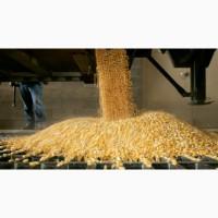 Услуги по помолу зерна