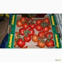 Продам оптом томаты на ветке из Турции