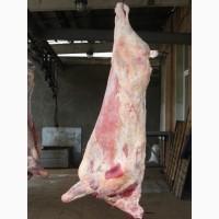 Продаём мясо-говядина