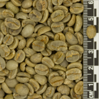 От производителя кофе арабика и робуста в зернах из вьетнама / beans+powder+arabica+husk