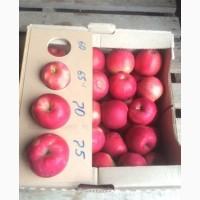 Яблоки с поля