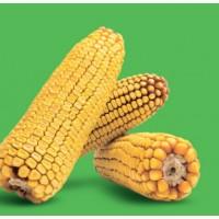 Семена кукурузы Краснодарский 194 МВ