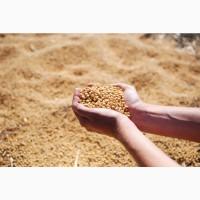 Семена сои АНАСТАСИЯ РС1 Варианты кредитования