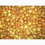 Продам лук-севок 2016 Голландия. Дешевые цены