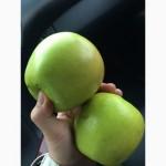 Реализуем яблоки из РБ, 1 сорта, Лигол, Айдаред, Глостер