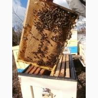 Пчелопакеты карпатка (пасека в С-Петербурге)