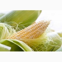 Семена кукурузы РОСС 130
