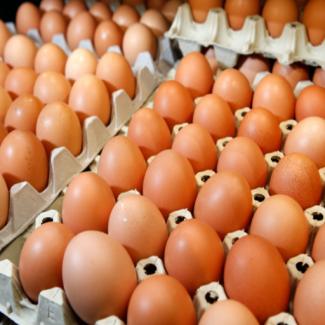 Яйцо куриное С1, С0, СВ