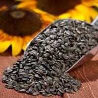 Семена подсолнечника сорт Белочка