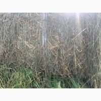 Овсяная солома с подсевом трав