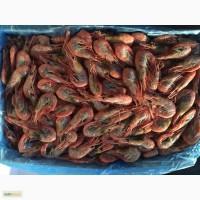 Продам креветки вареномороженные на складе в СПБ