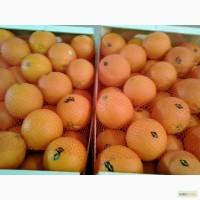 Апельсины сорта Марок Лейт