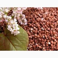 Семена гречихи: Девятка, Диалог