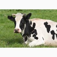 Коровий навоз россыпью с доставкой по Спб и ЛО