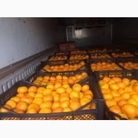 Мандарины сладкие оптом со склада в Иркутске