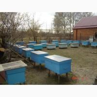 Продам пчелопакеты в апреле 2018г