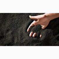 Семена рапса ярового (рапс)