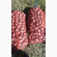 Продаем картофель продовольственный сорта разные