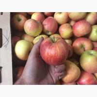 Продам Яблоки ГАЛЛА