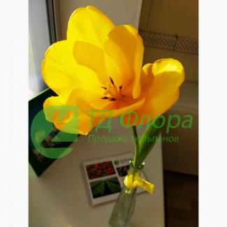 Желтые тюльпаны к 8 Марта