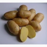 Картофель Галла