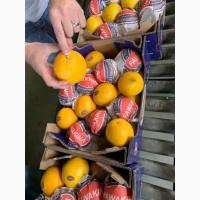 Апельсины оптом из Сирии напрямую от производителя