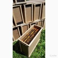Пчелопакеты Среднерусской пчелы