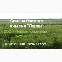 Семена озимого ячменя Луран ЭС/РС1