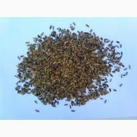 Продаем семена расторопши пятнистой (сорт Амулет)