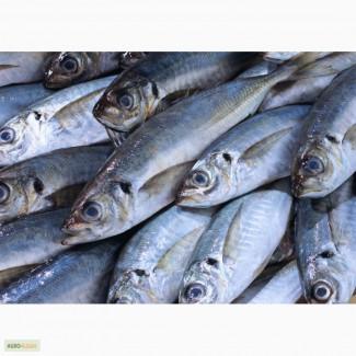 Свежезамороженная речная рыба оптом