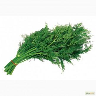 Продам укроп, петрушку, лук и другую зелень