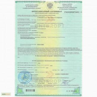 100% Квота Лицензия на Орехи Чагу Купить! Экспорт Цена КГ Вывоз в Китай Корею
