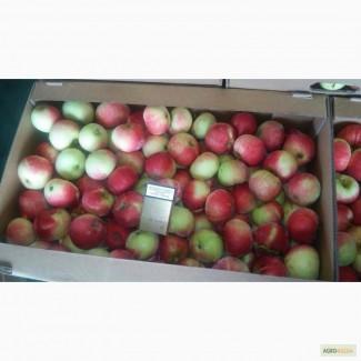 Яблоко различных сортов 65+ оптом