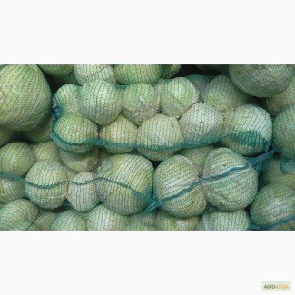 Продаём капусту белокочанную, разных сортов