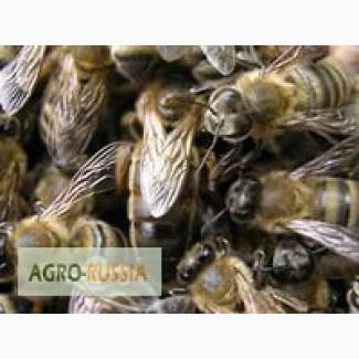 Продам Пчелопакеты и Пчеломатки (Карника и Карпатка)
