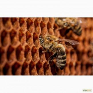 Пчелопакеты. Карпатка. Томск. Бесплатная доставка по России