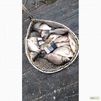 наживка для прудовой рыбы