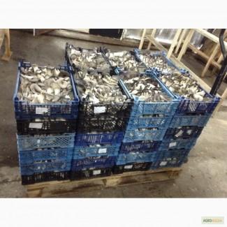 Вешенка грибы на переработку