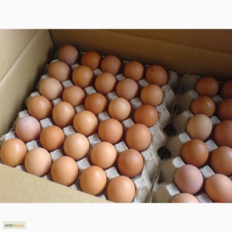 Продам яйцо