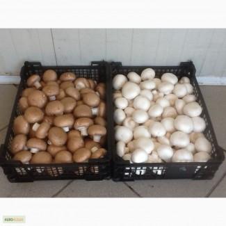 Продаем свежие грибы + доставка