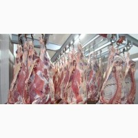 Продам Говядину(быки) оптом от производителя