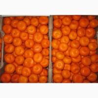 Реализуем оптовую продажу мандарин Дубиш с доставкой по РФ
