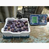 Продам овощные и фруктовые ящики из пенопласта