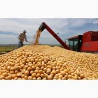 Купим соя бобы протеин 35-40%