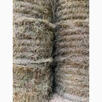 Сено луговое и сеяное