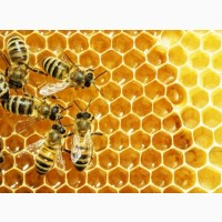 Реализуем пчелопакеты карпатка 4 рамки расплода