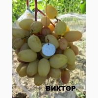 Продам саженцы и черенки винограда