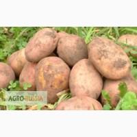 Продаём картофель продовольственный, разных сортов