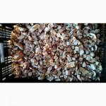Продам замороженные белые грибы