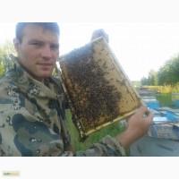 Продаю пчеломаток от Михаила Геращенко